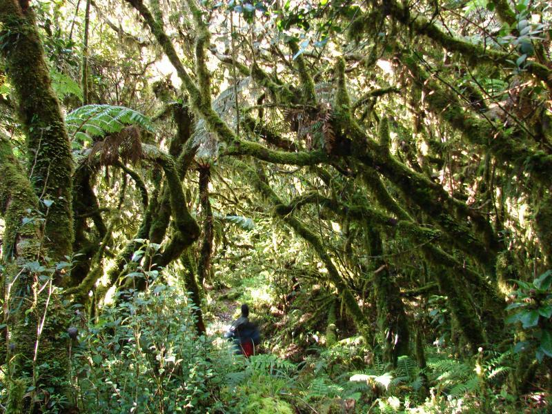 Philippine Biodiversity Expeditions