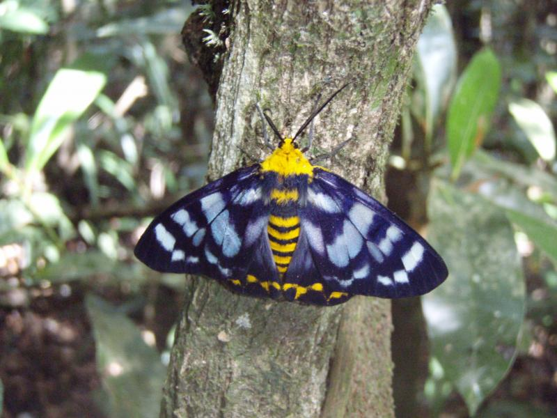 Other Australian Insects | Expeditions